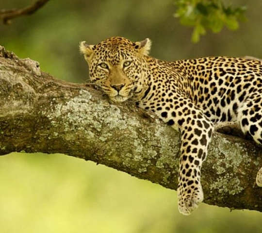 10 Days Safari in Kenya Photos