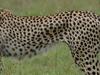 2 Nights 3 Days Masai Mara Exploration