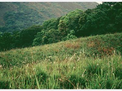 Chembra Landscape