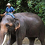 Chiang Dao Elephant Training Center