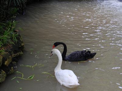 Chiang Mai Zoo Bird
