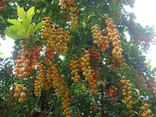 Chikmagalur Spices