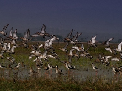 Chilika Wetlands - Ramsar Site