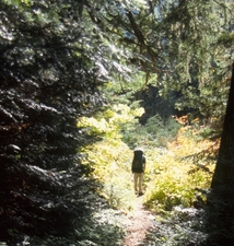 Chilliwack River Trails