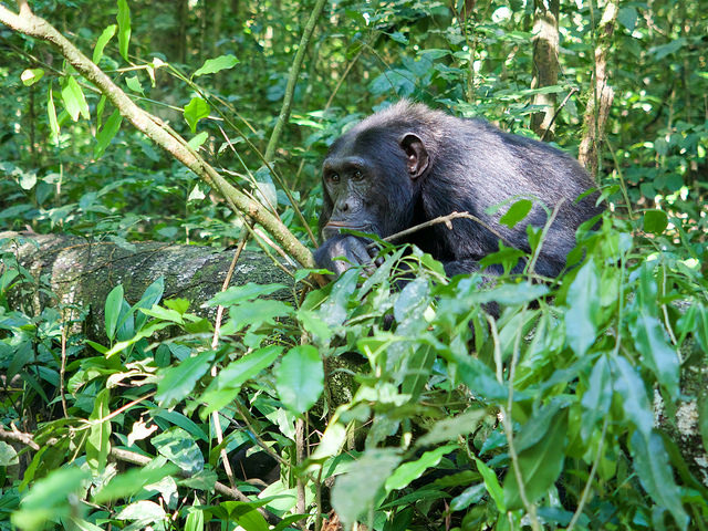 5 Days Kibale Forest And Queen Elizabeth National Park Safari Photos