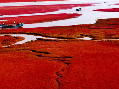 China's Gorgeous Red Beach At Panjin