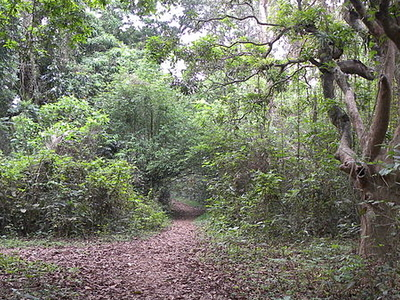 Chintamani Kar Bird Sanctuary-Inside View