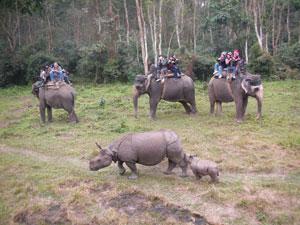 Chitwan Safari Nepal