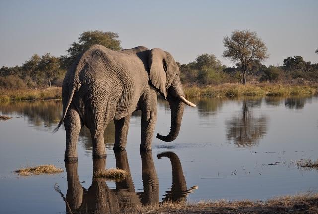 Elephant Trail - 15 Days Safari Photos
