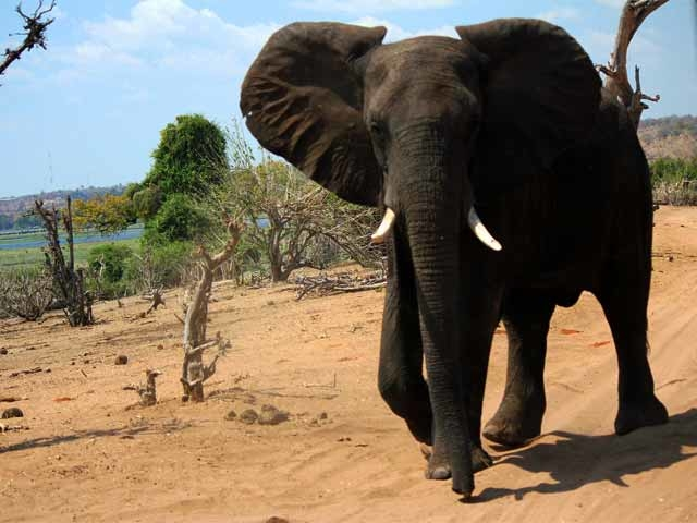 Victoria Falls & Chobe Luxury Experience Photos