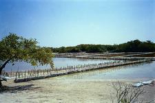 Chunchucmil Salinas At Yucatán - Mexico