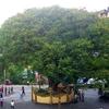City Of Srilanka, Hatton