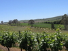 Clare Valley (wine Region)