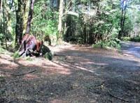 Clements Road End Campsite