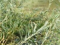 CUN - Sistema Szaporca de los lagos y aguas estancadas