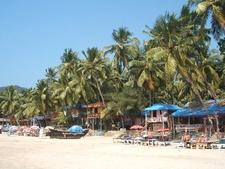 Coconut Trees Around Palolem Beach