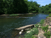 Collins River