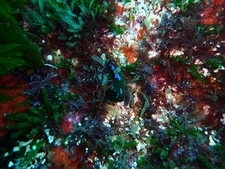 Colorful Underwater Landscape @ Poor Knights Diving Site NZ