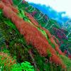 Colourful Zuluk