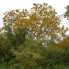 Comoé National Park