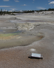 Constant Geyser - Yellowstone - USA