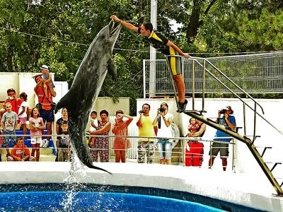 Constanta - Dolphinarium Showtime