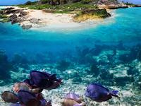 Bangkok Pattaya Coral Island Tour