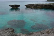 Coral Lifou - New Caledonia