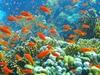 Coral Reef In  Ras  Muhammad Nature Park Iolanda Reef