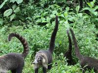 San Pedrillo Overnight Tour Corcovado National Park - Costa Rica