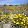 Cottonwood Trail 120 - Tonto National Forest - Arizona - USA