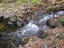 Creek Inside Ricketts Glen State Park PA