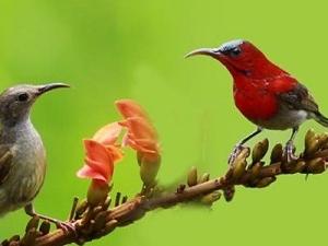 Exquisite Bird Watching In Nagaland