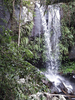 Curtis Falls Track - North Island - New Zealand