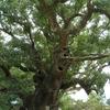 Yufuta's Forest