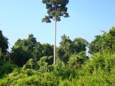 Rich Diversity Of Flora