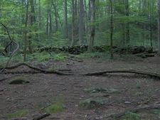 Rock Wall At The Old Cantrell Homesite On Porters Creek