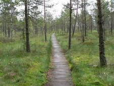 Cepkeliai Marsh In Dzūkija National Park