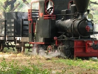 Cepu Floresta Ferroviária