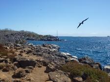 Bird On The Coast Of North Seymour Island