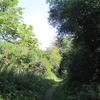 Coppett Wood Path