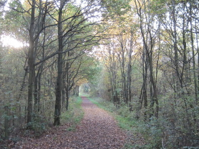 Copthall Old Common Path