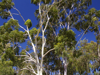 Australian Inland Botanic Gardens