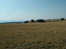 Custer National Forest Plateau