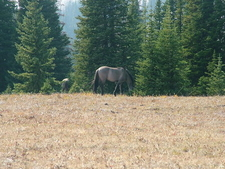 Custer National Forest Wild Horses