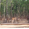 Dalma Wildlife Sanctuary