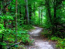 Dan's Trail 550 - Tonto National Forest - Arizona - USA