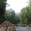 Danum Valley Jungle River - Sabah