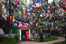 Darjeeling Flags