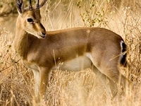 Darrah National Park